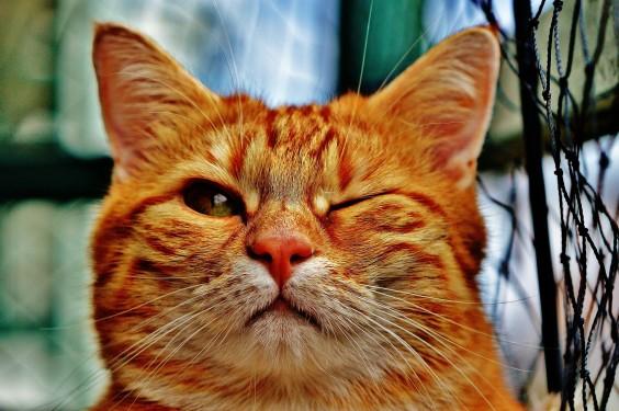 cat-1333926_1920